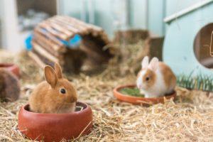 Kleintiere sind neben Aquaristik ein Standbein von Wassenaar.