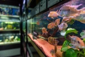 Bei Wassenaar gibt es ein Großes Sortiment im bereich Aquaristik.uaristik