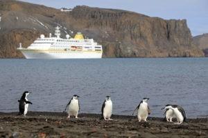 Antarktis Kreuzfahrt Bremen: MS Hamburg bei Deceptiobn Island, imVordergrund Pinguine einer Kolonie.